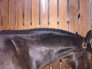 Winter Equestrian Fesival 2015