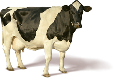 cow-11523022126rfblckuxgn.png