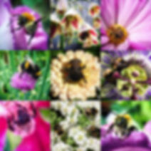 Images of flowers and bees from gardens designed by Viridi Garden Design on Instagram