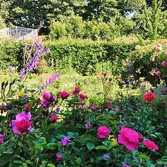 Cottage Garden planting design