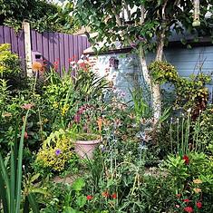 Bee Friendly Cottage Garden design