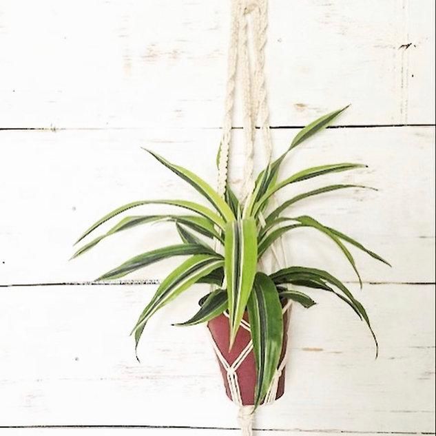 Classic Plant Hanger