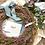 Thumbnail: Corona Mary Jane