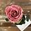 Thumbnail: Rosa Bella