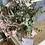 Thumbnail: Ramo de eucalipto natural