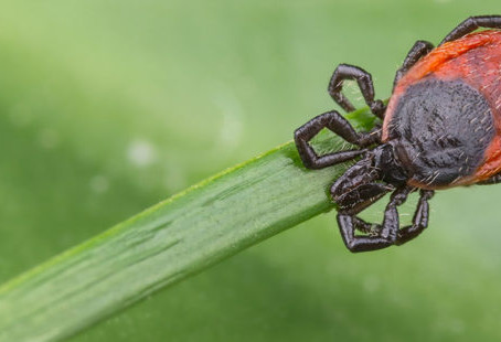 It's tick season – here's what you need to know about Lyme disease