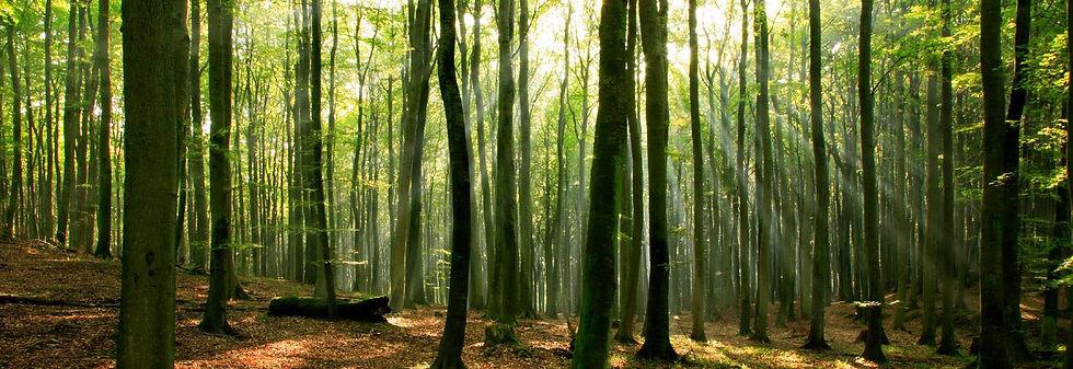 forest-banner.jpg