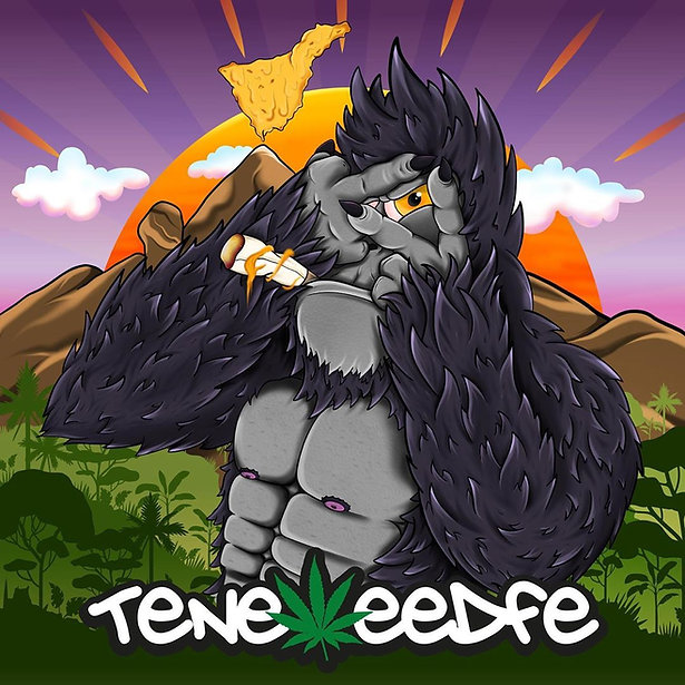 Teneweedfe The Island That Smokes