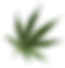 297505_weed-transparent-png.png