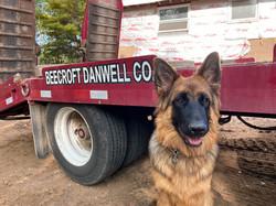 Danwell mascot