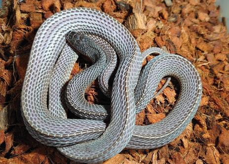 Files Snake