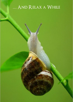 And Relax a While - Snail
