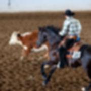 Arabian Working Cow class