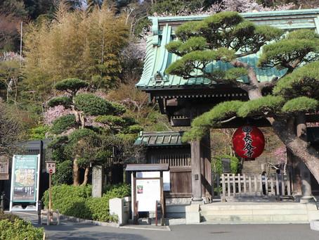 【おすすめ】絶景の長谷寺in鎌倉