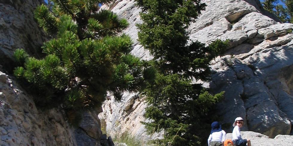 Cascade Conifers Lab and Field Trip
