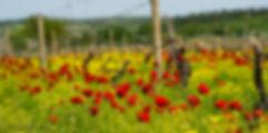 Весна в Кахетии, Грузия