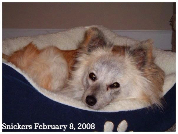 Dogs love comfortable dog beds snickers