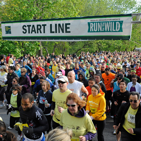 Bronx Zoo Run for the Wild