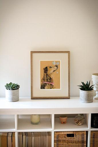 Pencil pet portrait framed