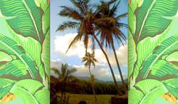 hawaii-53.JPG