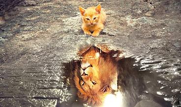 chat-reflert-lion-1.jpg