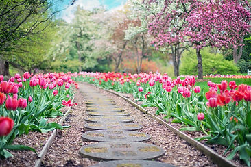 chemin fleurs.jpg