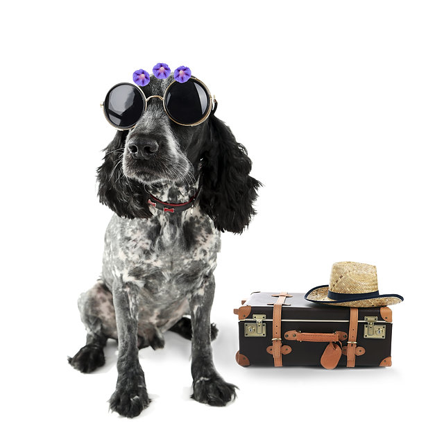 Funny dog tourist with suitcase, sunglas