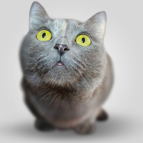 Serious Kitten_edited.jpg