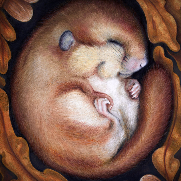 SLEEPY LITTLE DORMOUSE
