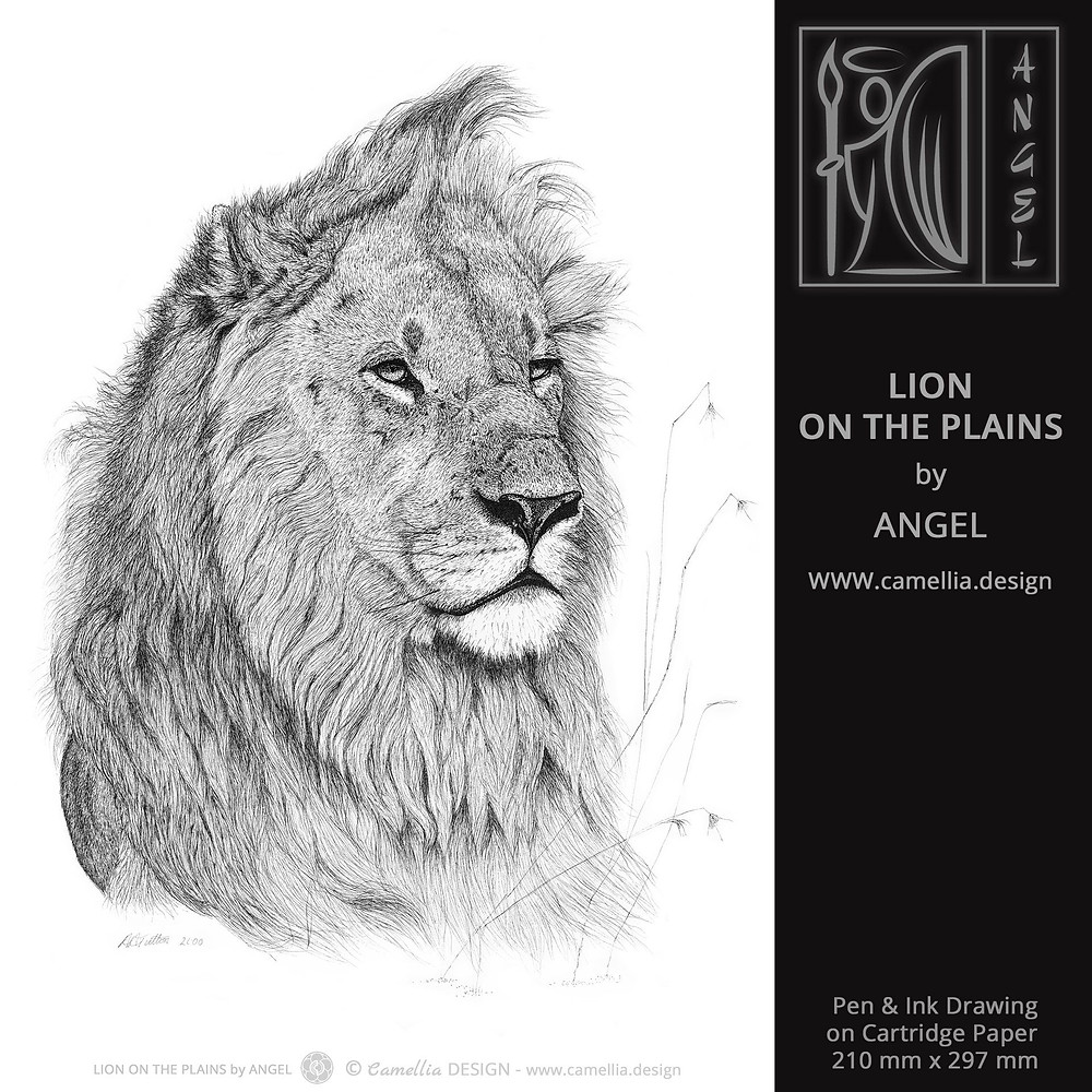 LION ON THE PLAINS | Pen and ink drawing by ANGEL