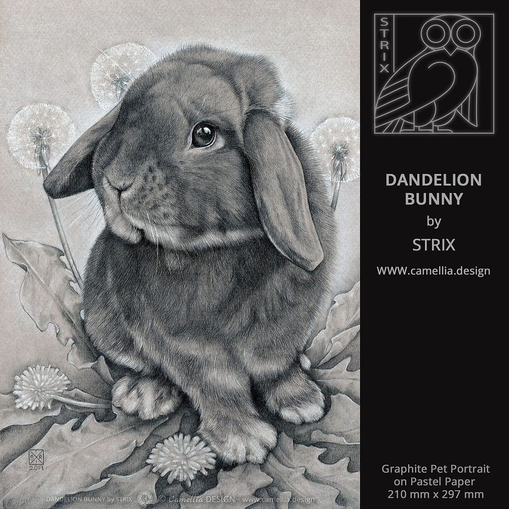 DANDELION BUNNY | rabbit graphite pet portrait | artist STRIX