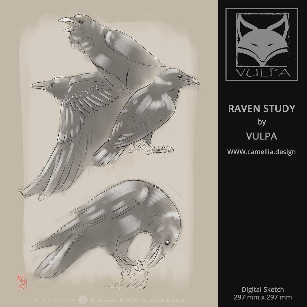 RAVEN STUDY | digital sketch by VULPA | Free Download