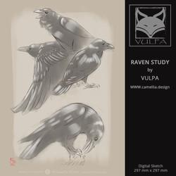 RAVEN STUDY