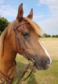 Bambi horse photo