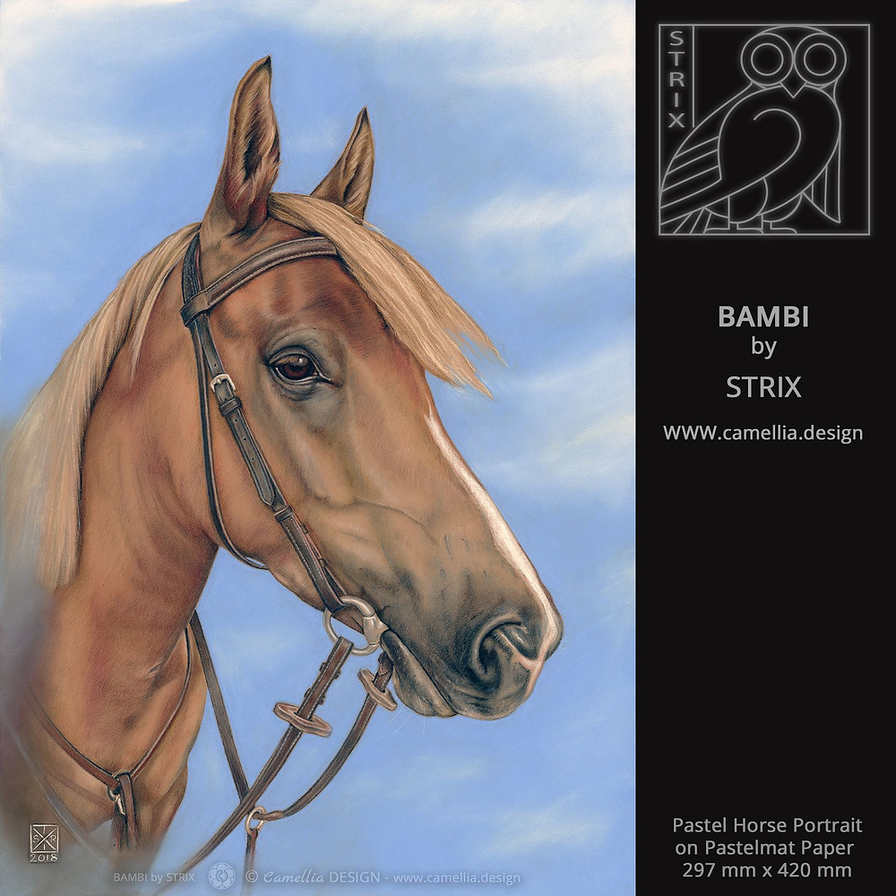 BAMBI pastel horse portrait by STRIX
