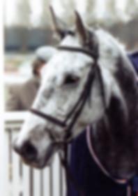 Cotapaxi-horse-photo.jpg
