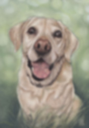 BAILEY-IN-THE-MEADOW-pastel-pet-portrait