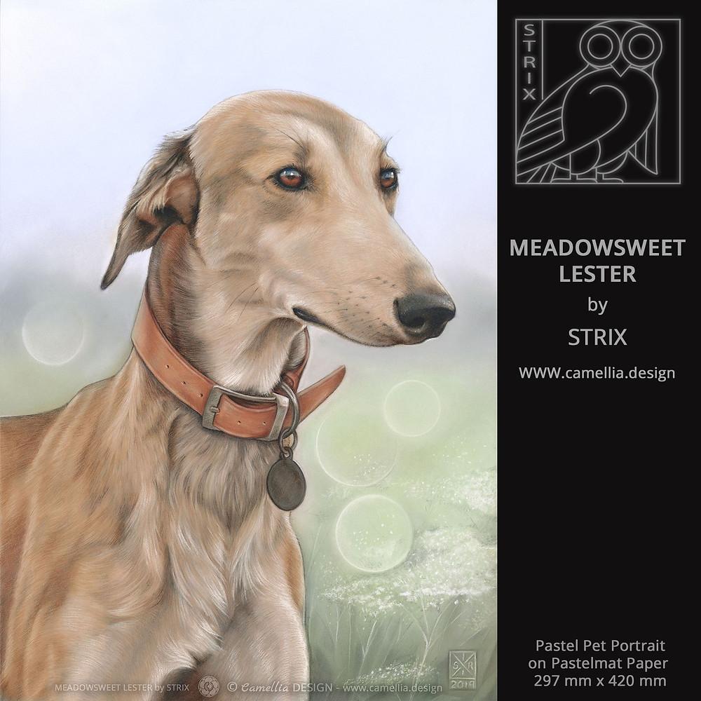 BAILEY IN THE MEADOW   Pastel Pet Portrait by STRIX