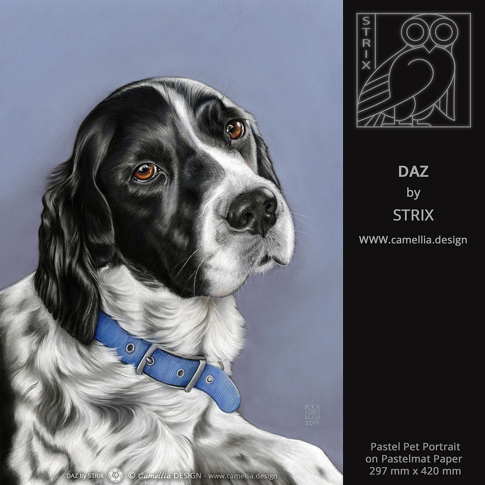 DAZ | spaniel pastel portrait by STRIX