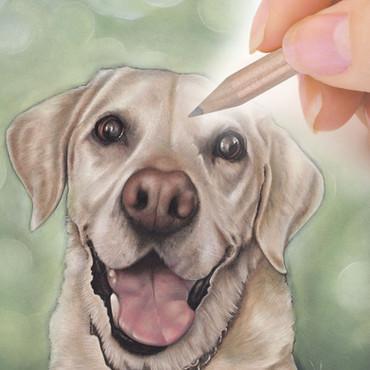 Pastel pet portrait commission from CAMELLIA DESIGN