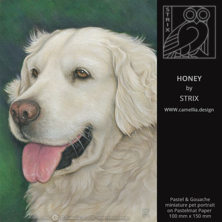 HONEY | Miniature dog portrait by STRIX