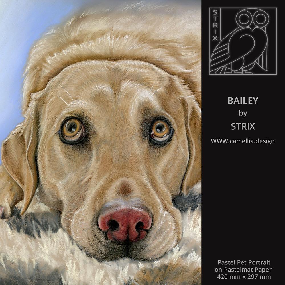 BAILEY | Pastel Pet Portrait by STRIX