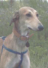 Lester-dog-photo.jpg