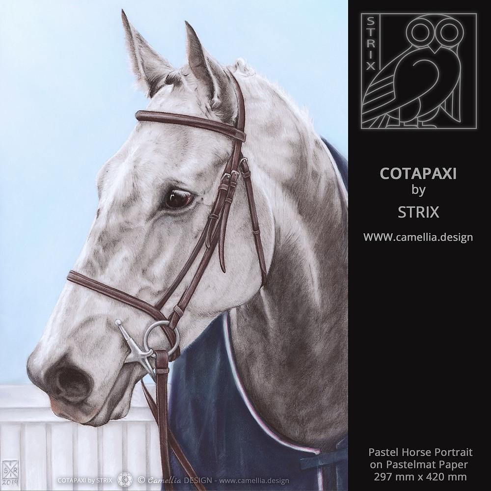 COTAPAXI | Pastel Horse Portrait by STRIX