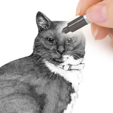 Pen and Ink pet portrait commission from CAMELLIA DESIGN
