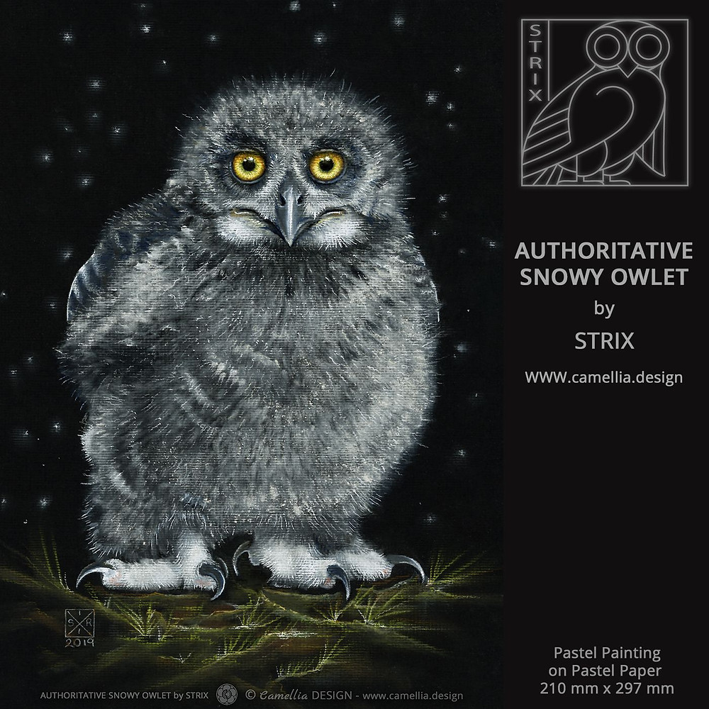 AUTHORITATIVE SNOWY OWLET   Pastel Painting by STRIX