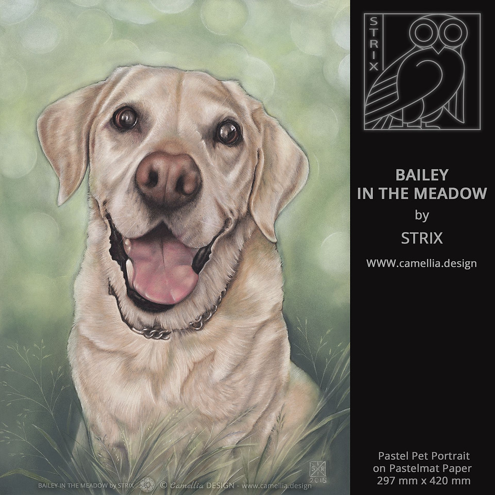 BAILEY IN THE MEADOW | Pastel Pet Portrait by STRIX