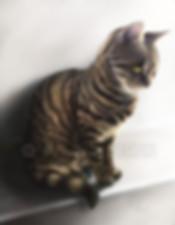 KAT digital pet portrait by VULPA