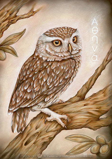 ATHENE little owl pastel painting by the artist STRIX