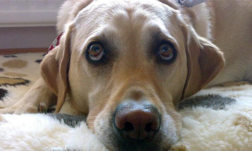 Pet Portrait Photo Camellia Design